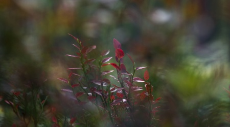 Meidi Melingen-maanedens bilde august