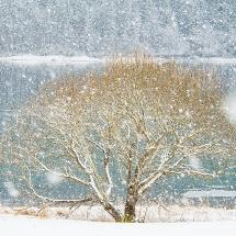 BioFoto Norge (126)