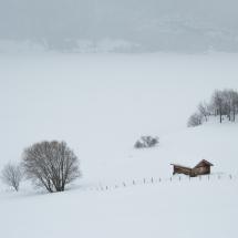 BioFoto Norge (130)