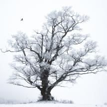 BioFoto Norge (132)