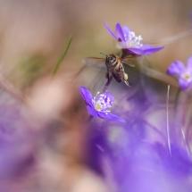 BioFoto Norge (137)