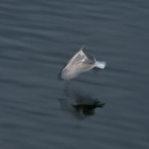 BioFoto Norge (143)