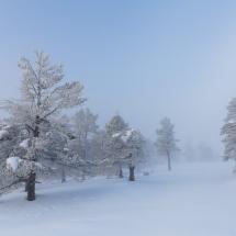 BioFoto Norge (161)