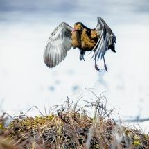 BioFoto Norge (178)