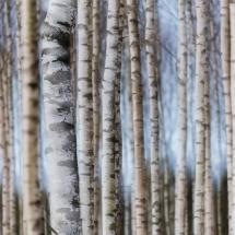 BioFoto Norge (182)