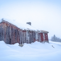 BioFoto Norge (190)