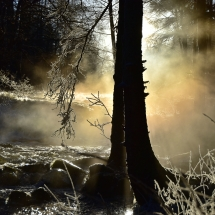 BioFoto Norge (198)