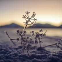 BioFoto Norge (240)
