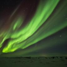 BioFoto Norge (253)