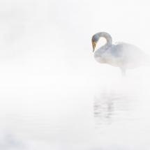 BioFoto Norge (277)