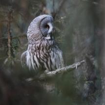 BioFoto Norge (42)