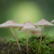 BioFoto Norge (53)
