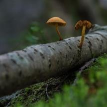 BioFoto Norge (54)