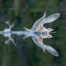 BioFoto Norge (7)