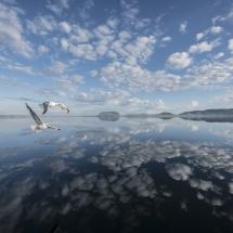 BioFoto Norge (95)