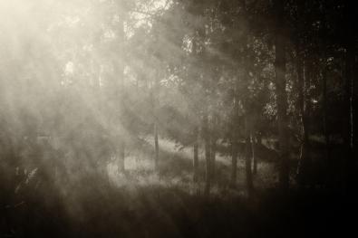 102_Synnøve G. Solberg_Sørlandet_Lyset i skogen
