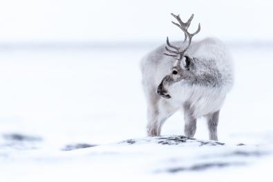 123_Kare Egil Kvilten_Indre Ostland_Svalbardrein