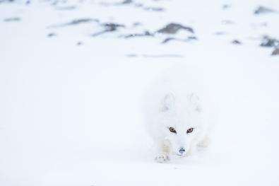 Ann-J-Nordvaalen_indre-ostland_Svalbard-rev