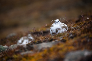 Bjarte-Hoff_Nordland_Svalbardryper