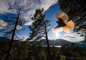 Foto Erlend Haarberg