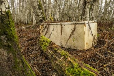 Fryser i skogen_Per Inge Værnesbranden_Midt-Norge-2991