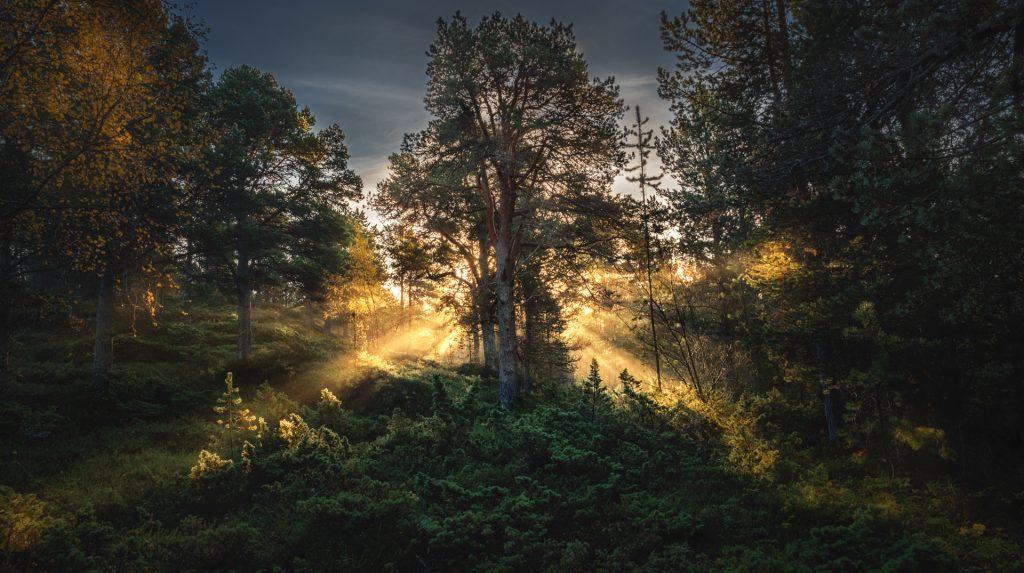 Mia Husdal - BioFoto Nordland