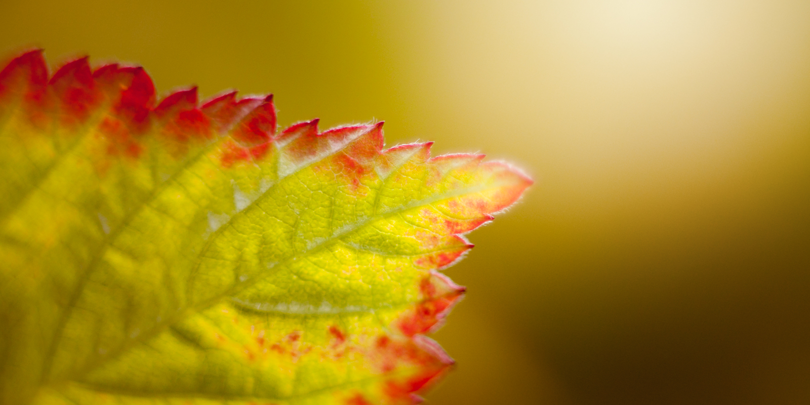 Vedtekter for lokallagene i BioFoto