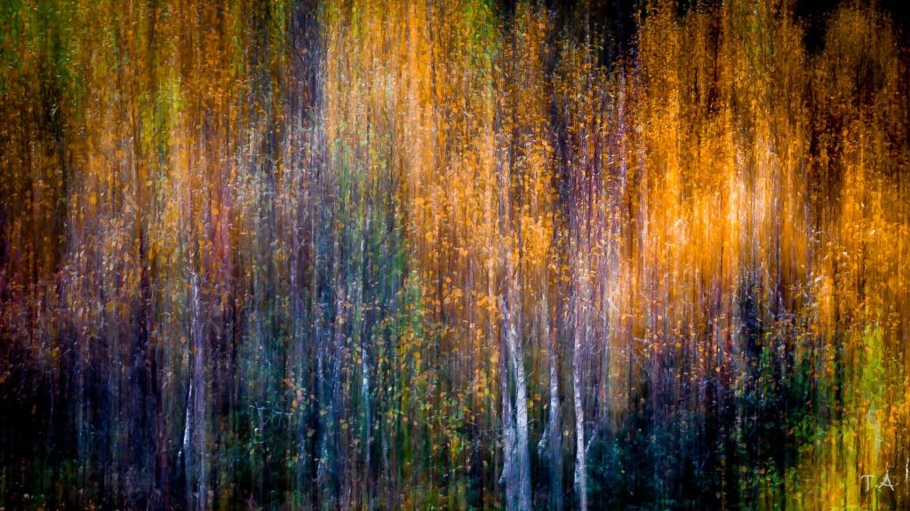 Høst-Foto Tommy Andreassen