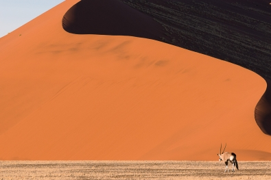 104_Oryx i Namibia
