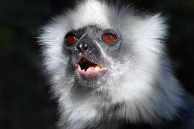 14_lemur
