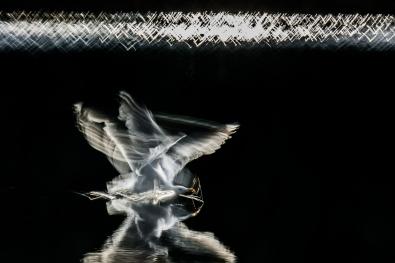 46_Elektrisk_dans