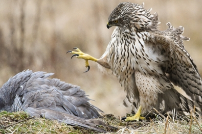 91_Egle fighting