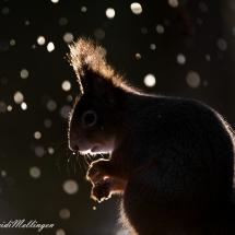 Selv om det snør, kan solen plutselig titte frem, og da kan det bli mye fint...