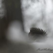 Ekorn i regnvær