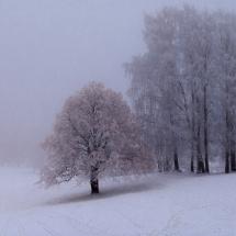 BioFoto Norge (10)