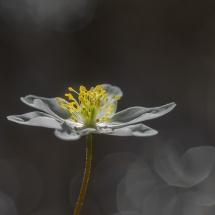 BioFoto Norge (112)