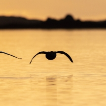 BioFoto Norge (114)
