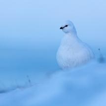 BioFoto Norge (148)
