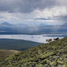 BioFoto Norge (163)