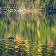 BioFoto Norge (172)