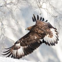BioFoto Norge (179)