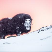 BioFoto Norge (206)