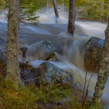 BioFoto Norge (225)