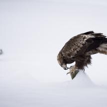 BioFoto Norge (237)