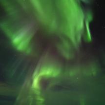 BioFoto Norge (245)