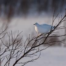 BioFoto Norge (248)