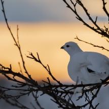 BioFoto Norge (252)