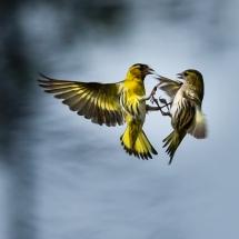BioFoto Norge (261)
