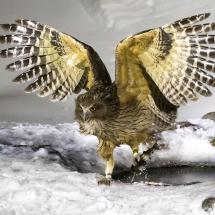 BioFoto Norge (275)