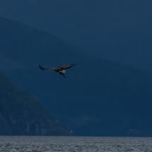 BioFoto Norge (37)